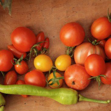 Jungpflanzen -Sortenbeschreibungen 2020